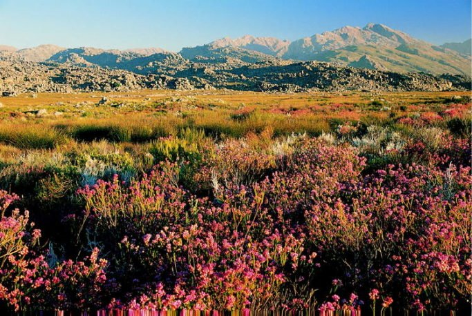 Cape Floral Region Protected Areas, South Africa
