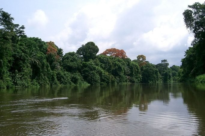 cameroon-rainforest